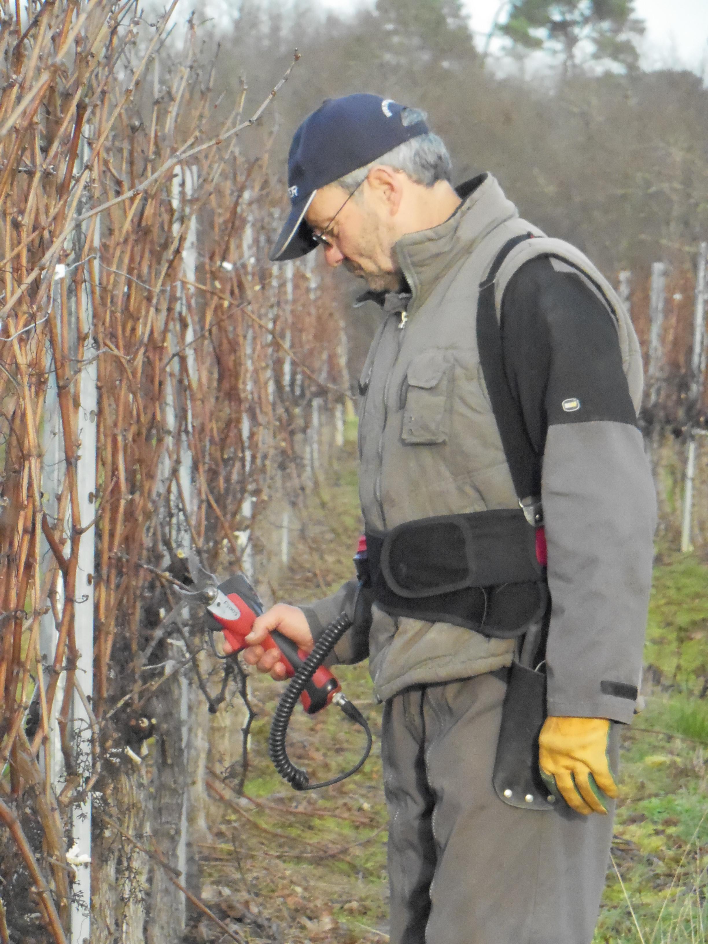 Jean-Luc DAVID taille les vignes du château de Garbes