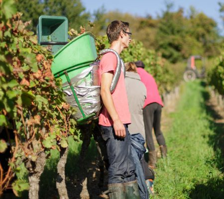 Château de Garbes - Grand vins de Bordeaux - Viticulteur récoltant - Travail manuel de la vigne