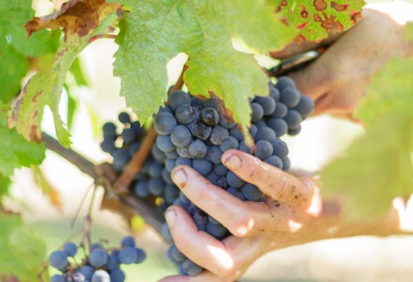 Château de Garbes - Grand vins de Bordeaux - Viticulteur récoltant