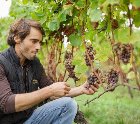 Château de Garbes - Grand vins de Bordeaux - Viticulteur récoltant - Famille David