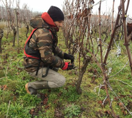 Château de Garbes - Grand vins de Bordeaux - Viticulteur récoltant - Taille des vignes au château
