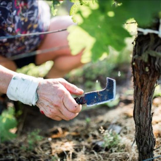 Château de Garbes - Grand vins de Bordeaux - Viticulteur récoltant - Travail manuel de la vigne au château