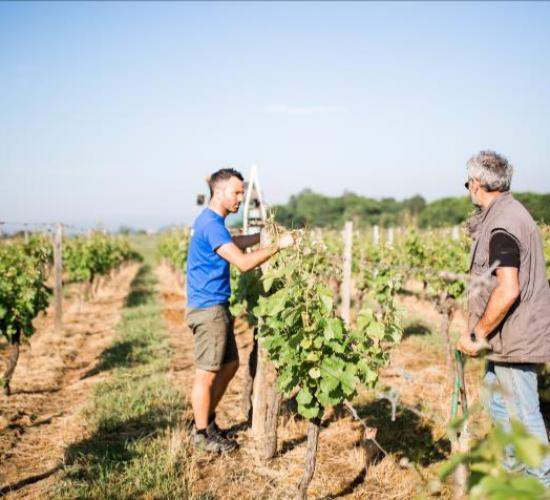 Château de Garbes - Grand vins de Bordeaux - Viticulteur récoltant - Travail de la vigne au château