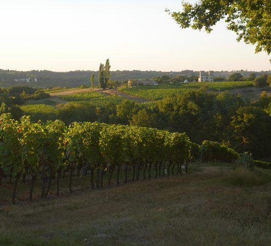 panorama des côtes de Bordeaux château de Garbes larrayan