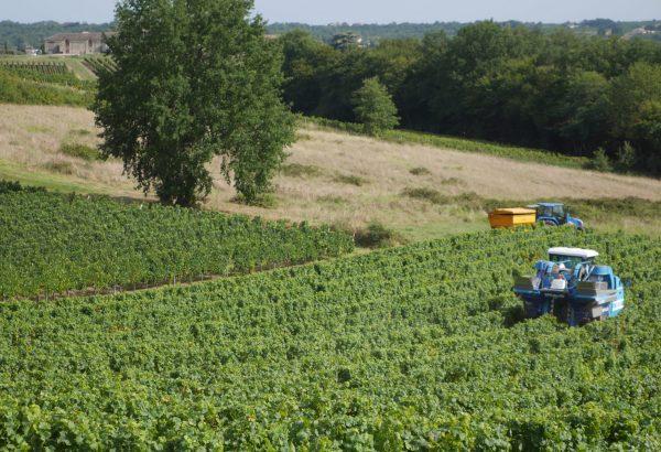 Château de Garbes - Grand vins de Bordeaux - Viticulteur récoltant - vendanges au château