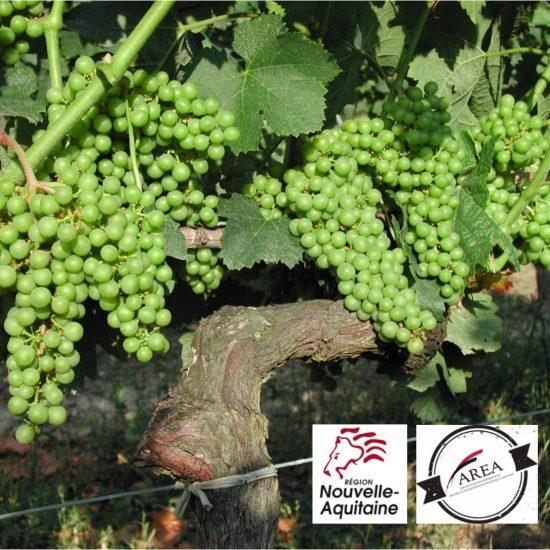 Château de Garbes - Grand vins de Bordeaux - Viticulteur récoltant -AREA certification culture raisonnée HVE 2